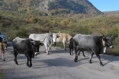 alpen italien radreise piotr nogal noxot 564