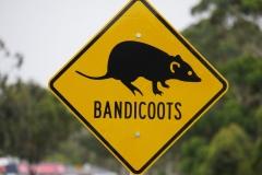 australien copyright piotr nogal 195