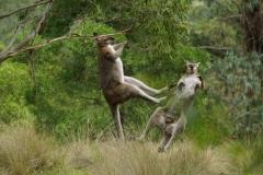 australien 225 copyright piotr nogal