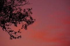 piotr-nogal-copyright-482