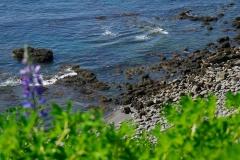 island-noxot-copyright-piotr-nogal_20190731_145613_DSC03721.JPG