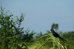 052-Cuba-copyright-piotr-nogal