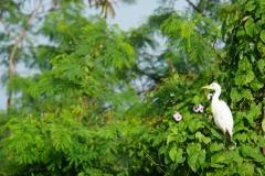 056-Cuba-copyright-piotr-nogal