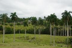 063-Cuba-copyright-piotr-nogal