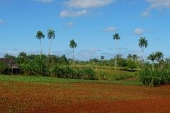074-Cuba-copyright-piotr-nogal