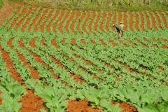 075-Cuba-copyright-piotr-nogal