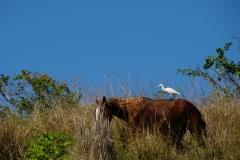 246-Cuba-copyright-piotr-nogal