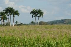 264-Cuba-copyright-piotr-nogal