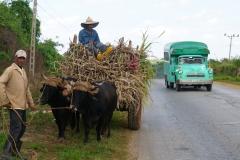 325-Cuba-copyright-piotr-nogal