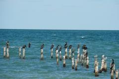 329-Cuba-copyright-piotr-nogal