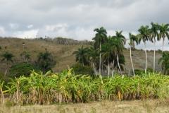 401-Cuba-copyright-piotr-nogal