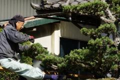 004 honshu und kyushu copyright piotr nogal