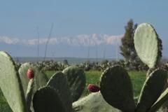 marokko piotr nogal noxot 062