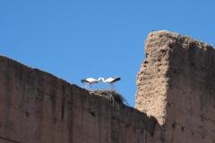 marokko piotr nogal noxot 073