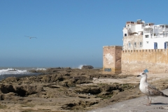 marokko piotr nogal noxot 079