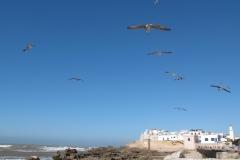marokko piotr nogal noxot 080