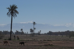 marokko piotr nogal noxot 098