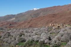 marokko piotr nogal noxot 155