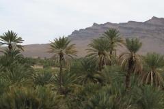 marokko piotr nogal noxot 259