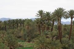 marokko piotr nogal noxot 268