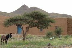 marokko piotr nogal noxot 270