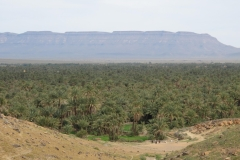 marokko piotr nogal noxot 271