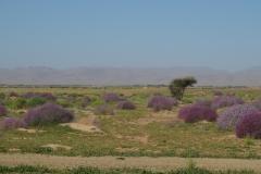 marokko piotr nogal noxot 282