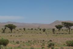 marokko piotr nogal noxot 284