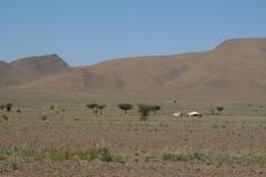 marokko piotr nogal noxot 285