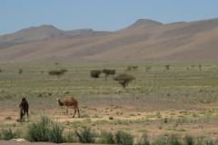 marokko piotr nogal noxot 287