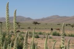 marokko piotr nogal noxot 288