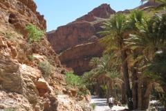 marokko piotr nogal noxot 352