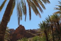 marokko piotr nogal noxot 353