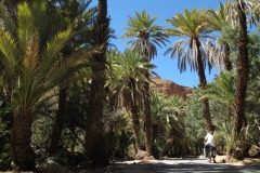 marokko piotr nogal noxot 354