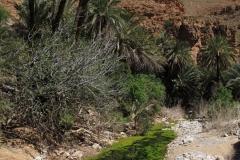 marokko piotr nogal noxot 355