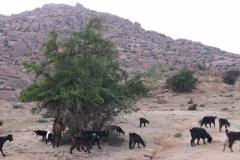 marokko piotr nogal noxot 384