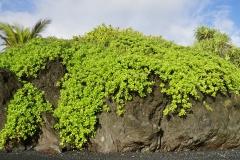 hawaii 029 copyright piotr nogal