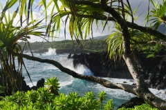 hawaii 034 copyright piotr nogal