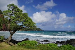 hawaii 046 copyright piotr nogal