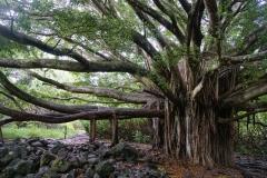 hawaii 067 copyright piotr nogal