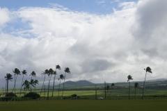 hawaii 258 copyright piotr nogal