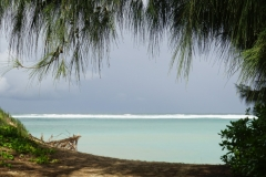 hawaii 261 copyright piotr nogal