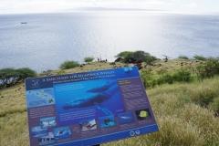 hawaii 268 copyright piotr nogal