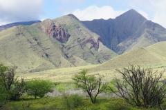 hawaii 273 copyright piotr nogal