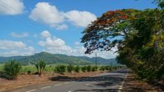 Mauritius copyright piotr nogal 20191128_091311