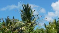 Mauritius copyright piotr nogal 20191128_100839
