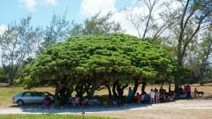 Mauritius copyright piotr nogal 20191128_135955