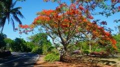Mauritius copyright piotr nogal 20191128_145523