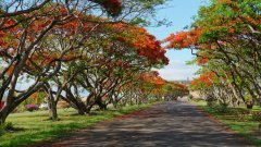 Mauritius copyright piotr nogal 20191129_155336