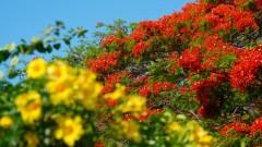 Mauritius copyright piotr nogal 20191129_155447